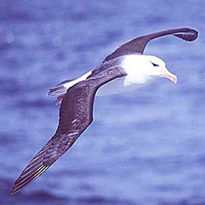 Fotos del Albatros (zootinga)